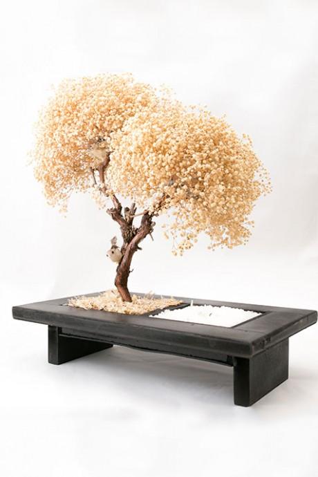 עץ-גיבסניות-שעווה