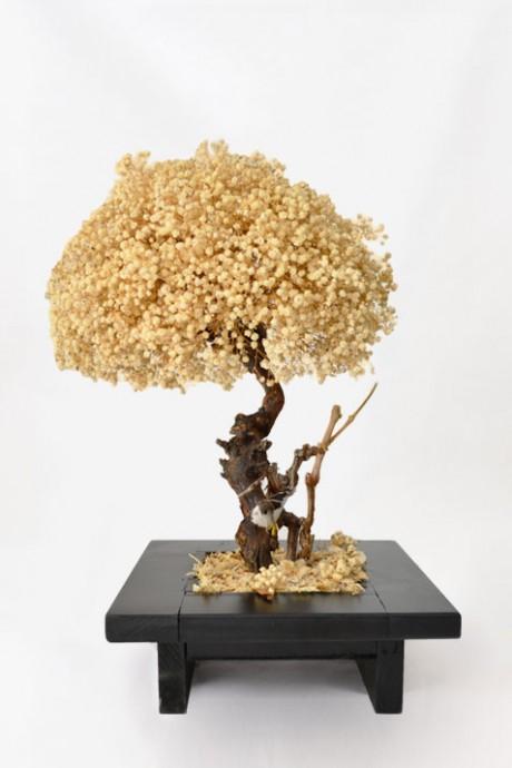 עץ-גיבסנית-יחיד