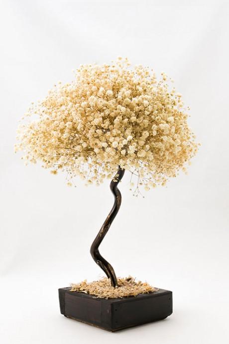עץ-גיבסנית-קטן