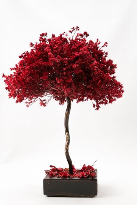 עץ-לימוניום-אדום