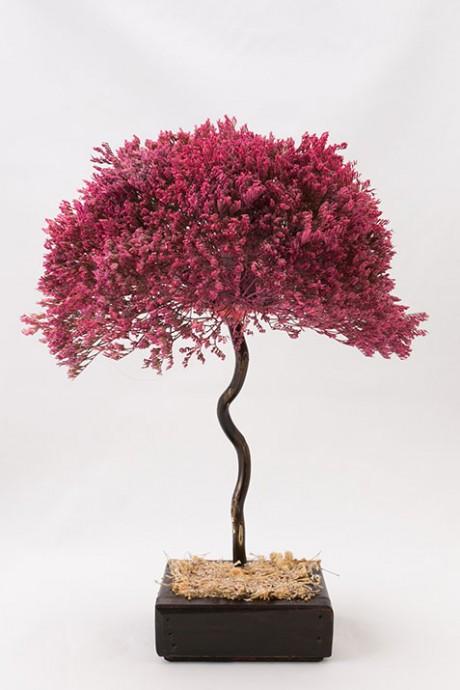 עץ-לימוניום-ורוד-עתיק