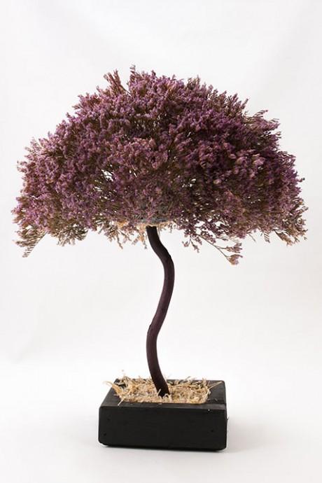 עץ-לימוניום-סגול