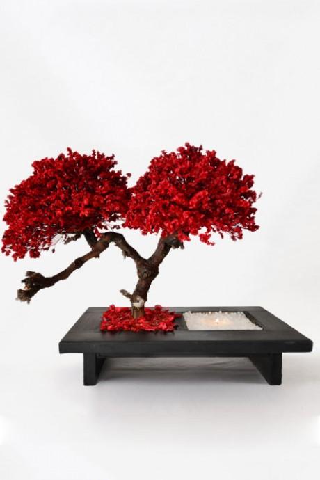 עץ-לימוניום-שעווה