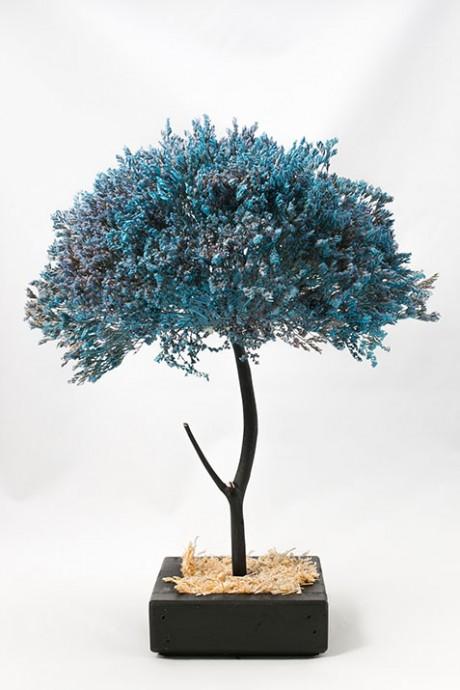 עץ-לימוניום-תכלת