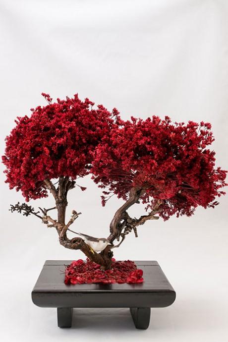 עץ-לימוניום-2-פריחות