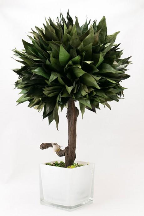 עץ-סהרון