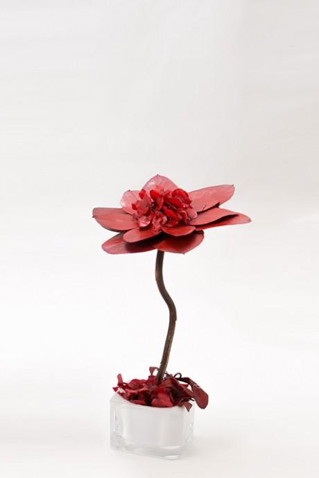 עץ-פרחי-אקליפטוס אדום