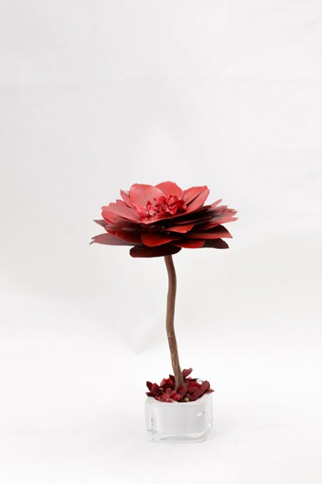 עץ-פרחי-אקליפטוס