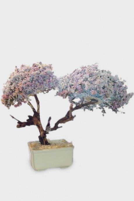 עץ-לימוניום-2-פריחות-קטן